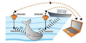 Le cri des baleines